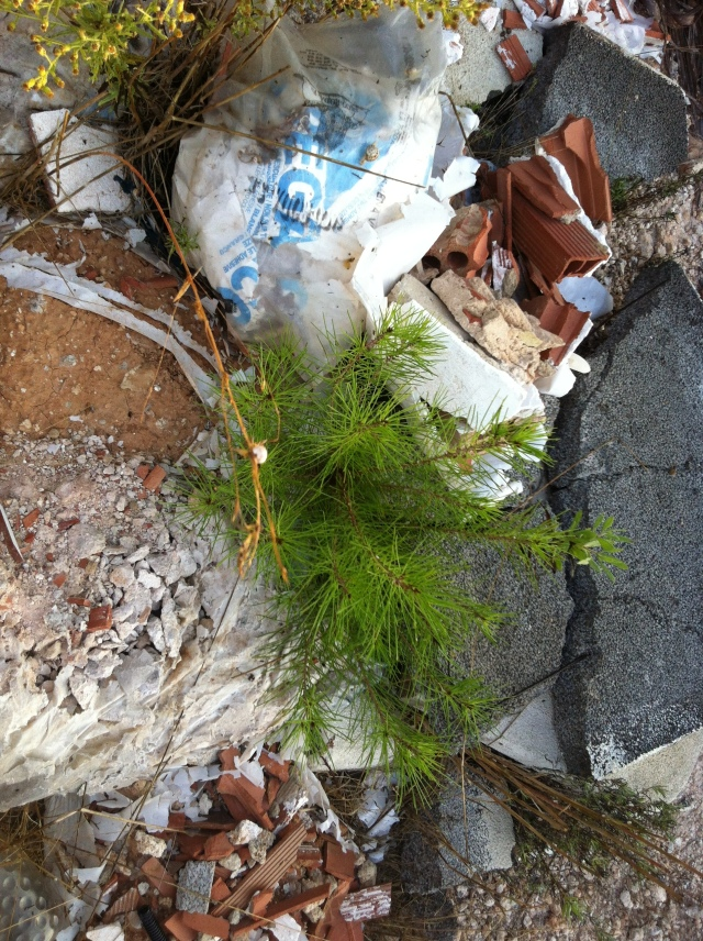 nature versus wasteland - skalabara.com