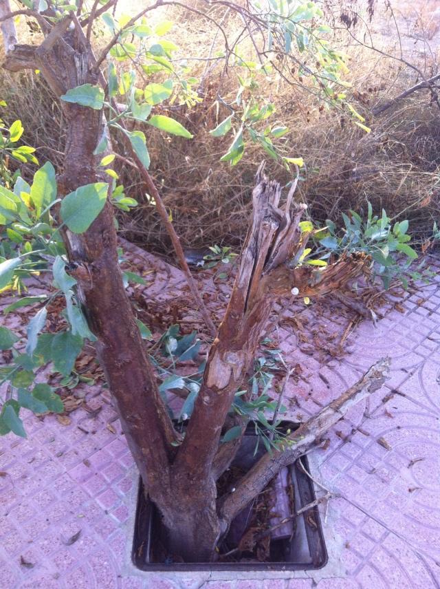 nature and wasteland - skalabara.com