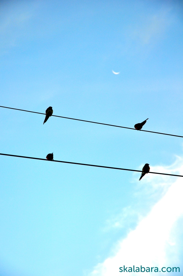swallows and new moon - skalabara.com