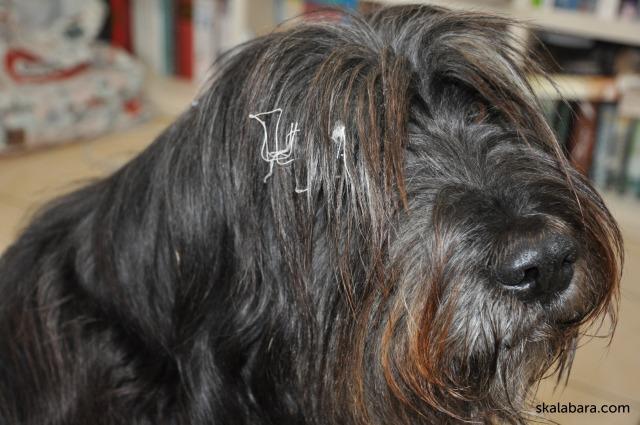 strubbel - the helping dog - skalabara.com