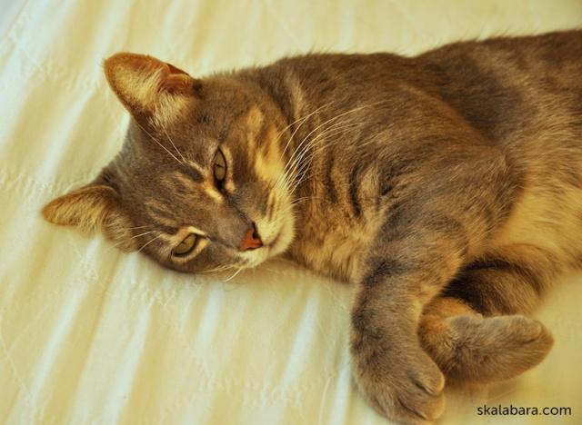 mickey has a siesta nap - skalabara.com