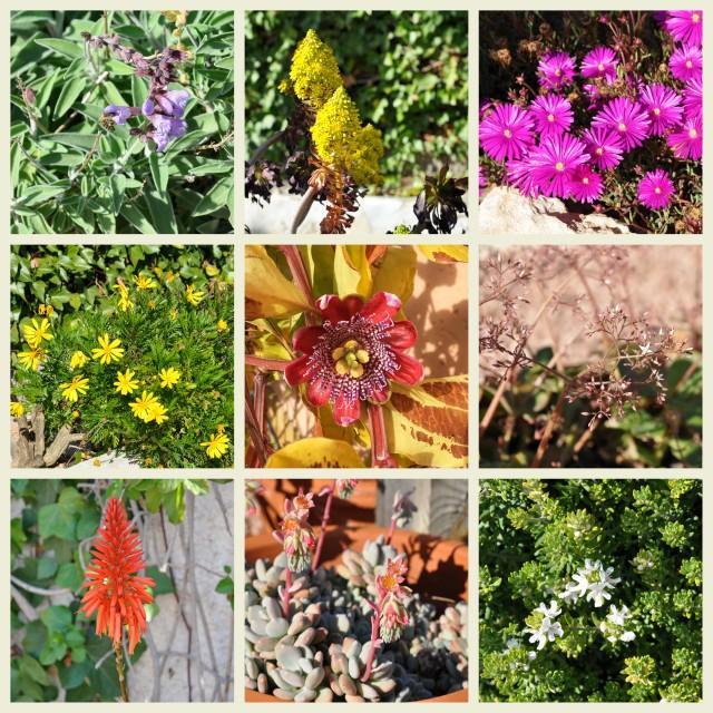 february in the garden - skalabara.com