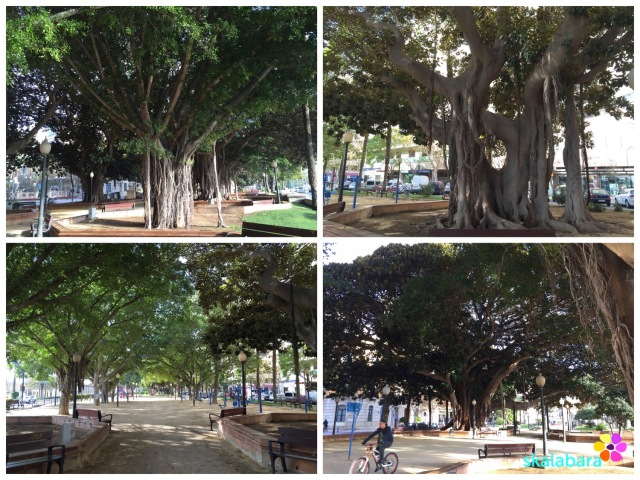 trees in alicante spain - skalabara