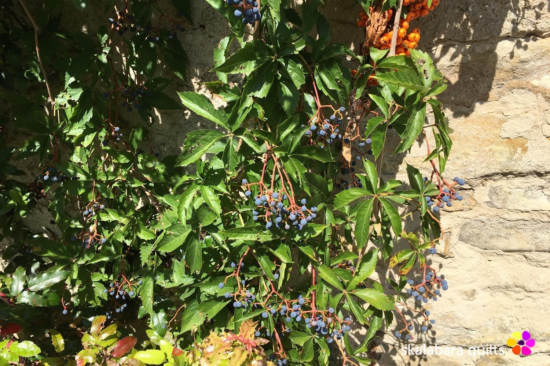 autumn berries 2 - skalabara quilts