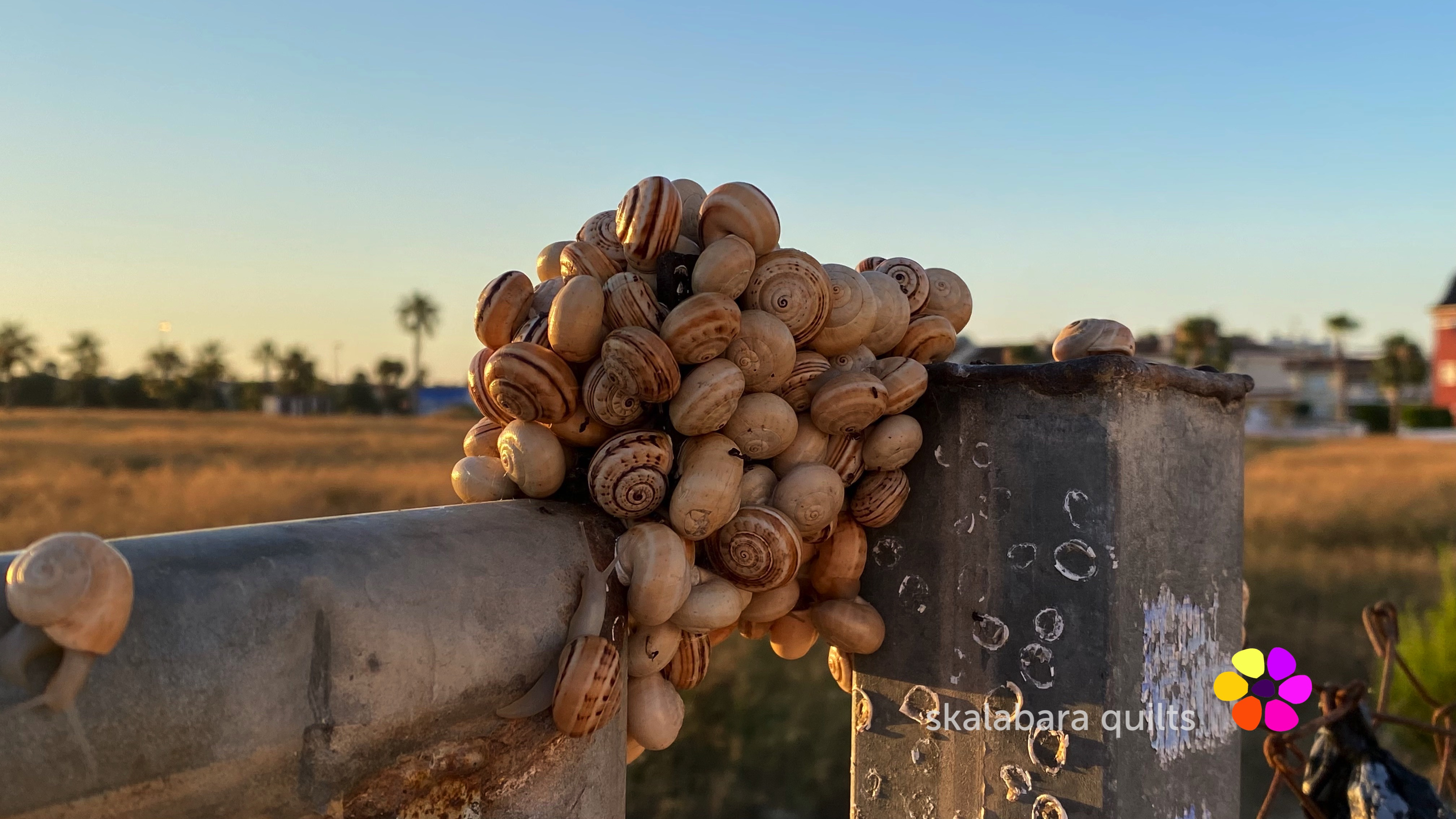 snails on trail - a journey for a better sunrise view